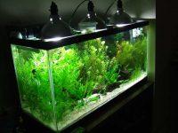 Светодиодное освещение аквариума с растениями своими руками